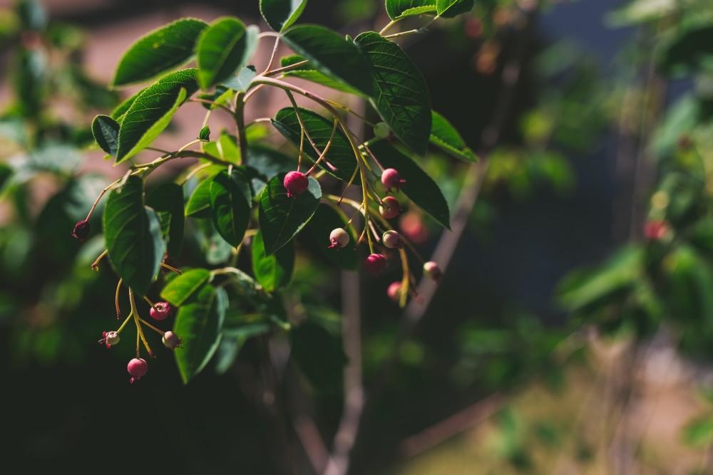 maruko_garden